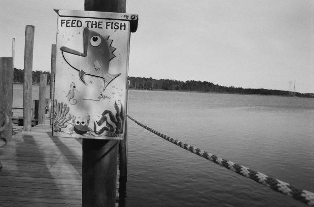feedthefish